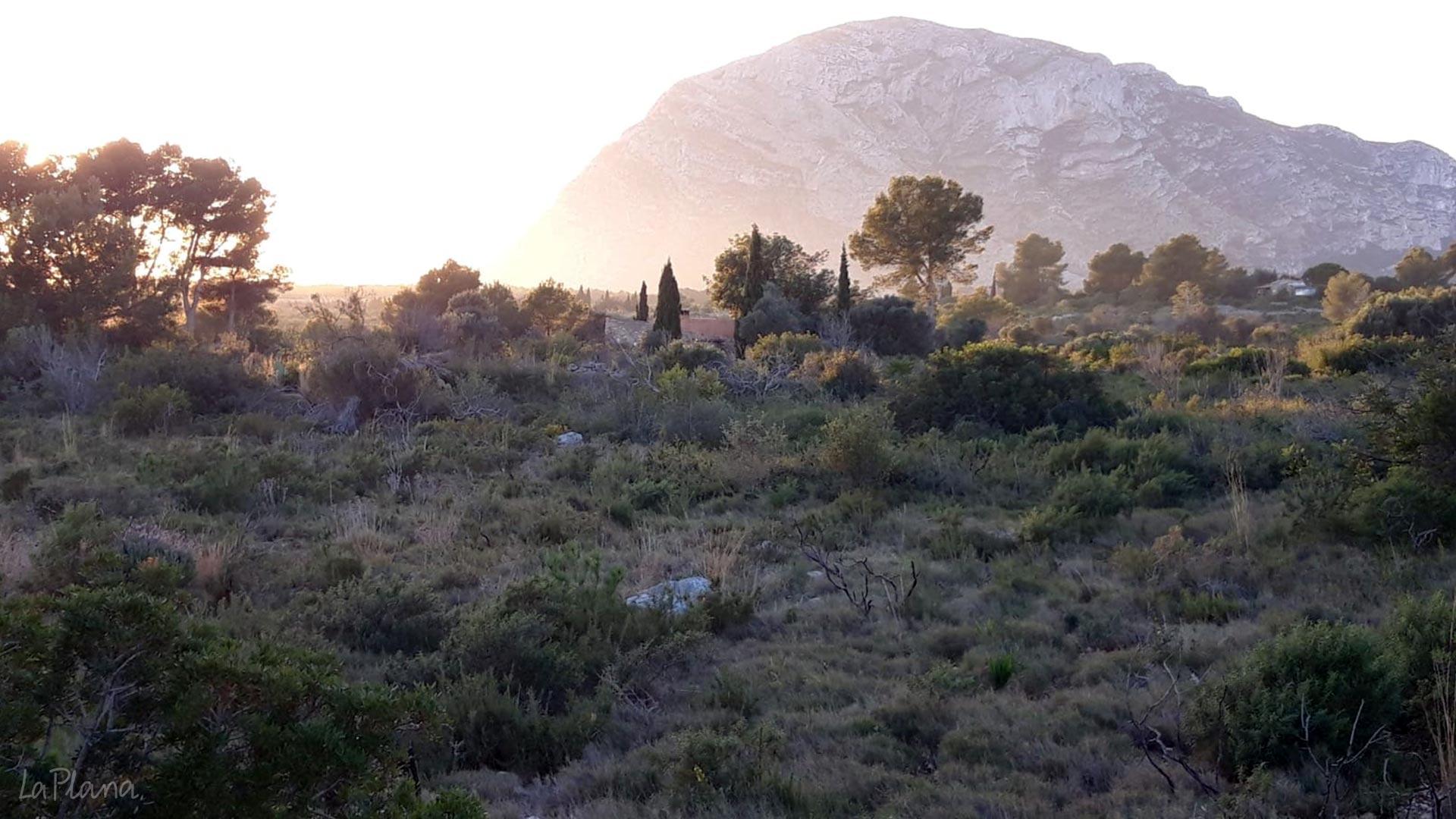 La Plana und Montgo